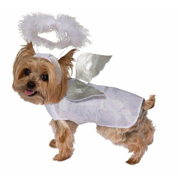 Amazoncom Forum Cute Pet Dog Cat Angel Halloween Costume Pet Dog