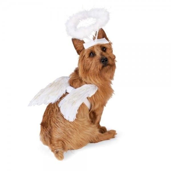 Angel Dog Costumes Korrectkritterscom