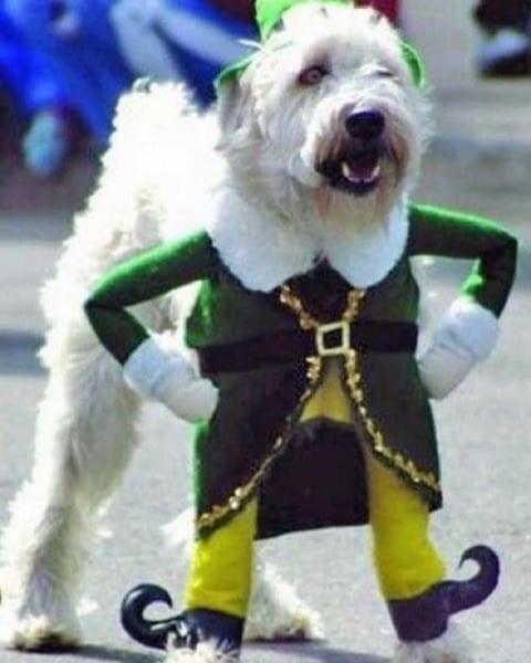 Buddy The Elf Dog Costume