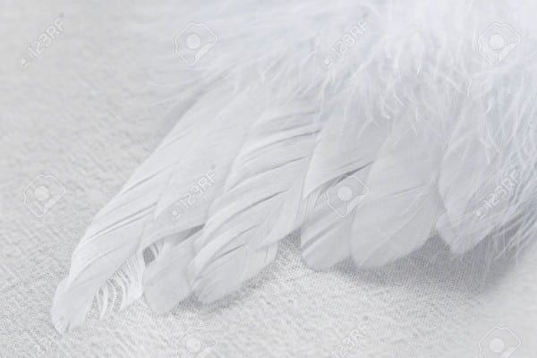 Macro Shot Of A Soft, Fluffy, White Feather Wing On A White Fabric