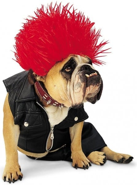 Cute Large Dog Halloween Costumes For Girl Dogs Large Dog Dog Beds
