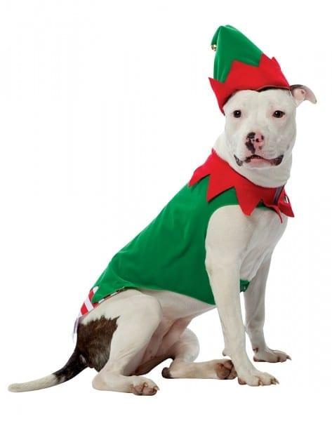 Dog Elf Suit