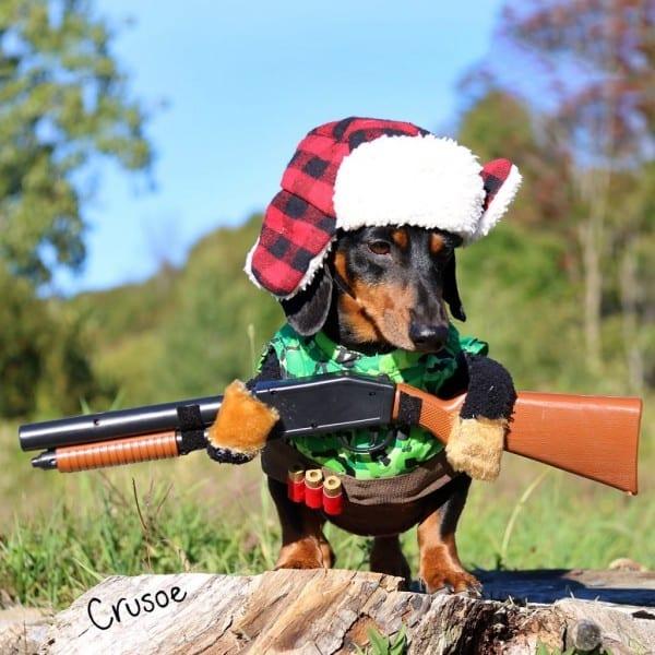 Hunting Dog Costume W Gun, Rain Umbrella Dog Costume, Hockey Dog