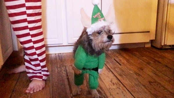 Hilarious Dog's Elf Costume