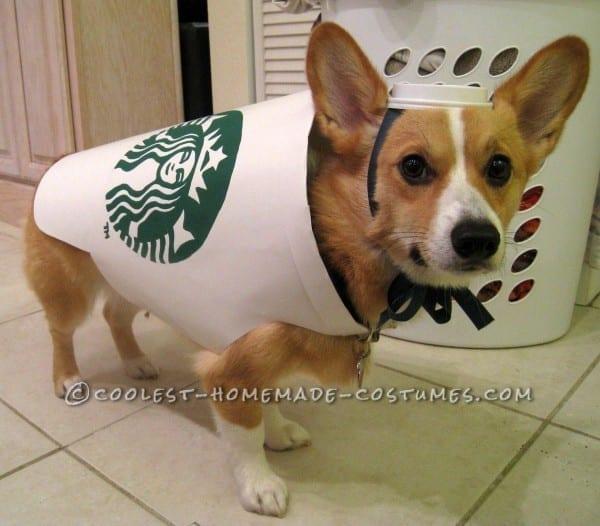 Big Dog Halloween Costumes