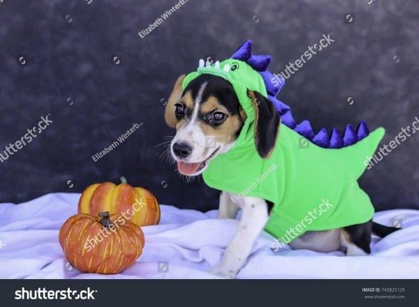 Beagle Puppy Green Blue Dinosaur Halloween Stock Photo (edit Now