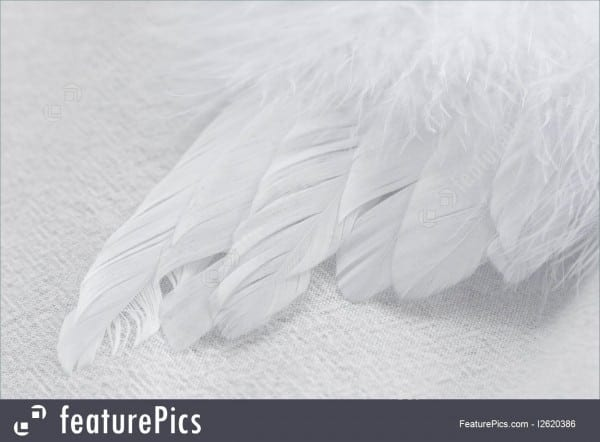 White Feather Angel Wing On White Background