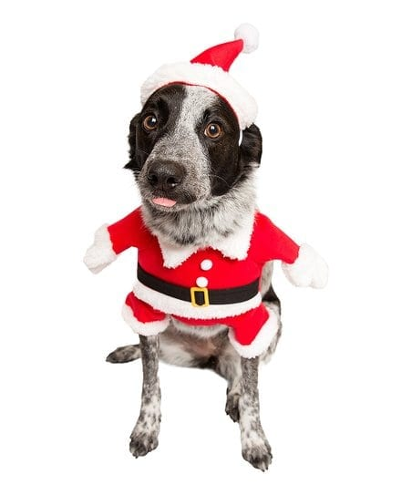 Pet Krewe Santa Paws Dog Costume