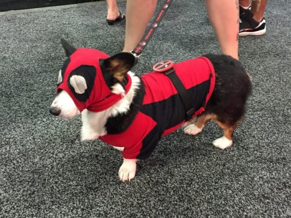 Dog In  Deadpool  Costume