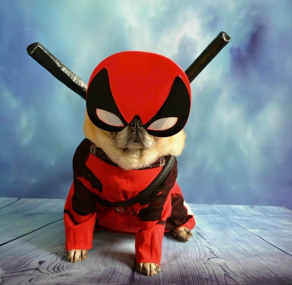 Pugpool' Deadpool Dog Sidekick