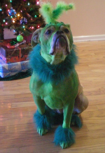 Homemade Grinch Who Stole Christmas Dog Costume