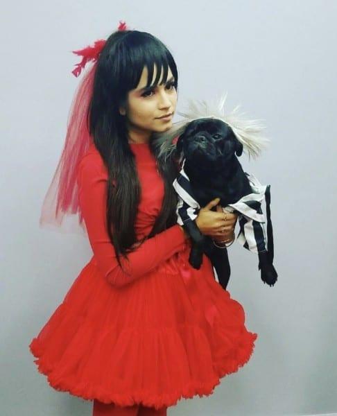 Halloween Beetlejuice Pug Costume Halloween Costumes Dog Costume