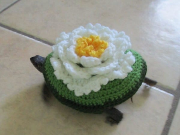 Pet Turtle Costume  Tortoise Outfit  Flower Costume  Flower Outfit