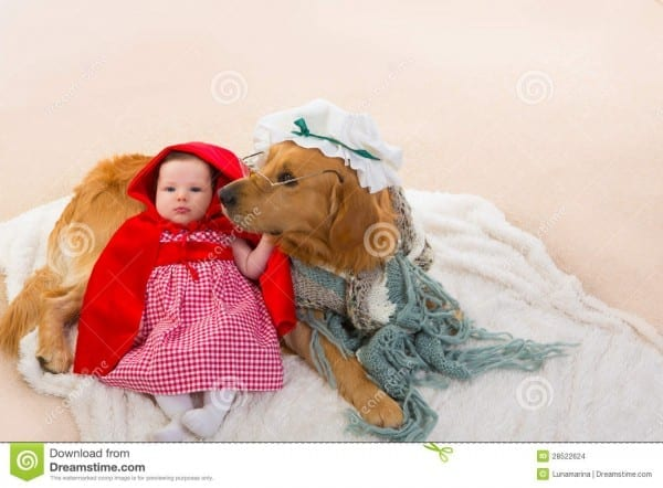 Baby Little Red Riding Hood With Wolf Dog As Grandma Stock Photo