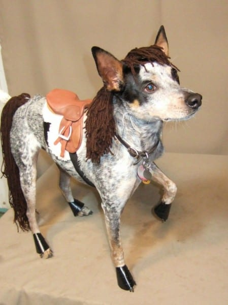 62 Of The Best Dog Costumes For Halloween …