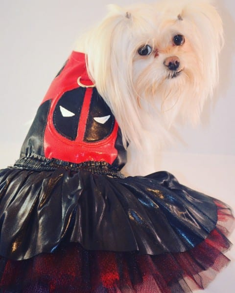 Deadpool Inspired Custom Dog Costume For Small Breed Dogs Only