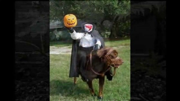 Best Halloween Animal Costumes Compilation 2015