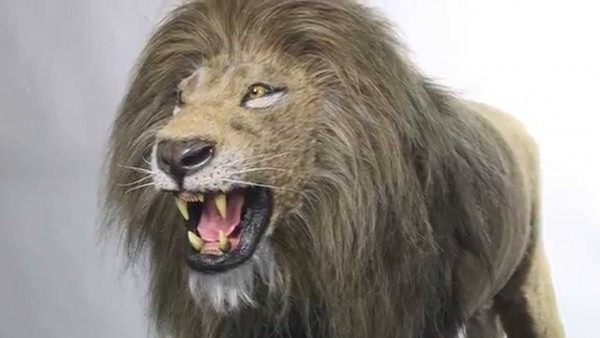Realistic Lion Puppets We Created For A Stage Show