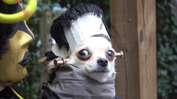 Frightfully Fantastic Dogs In Halloween Costume Meet