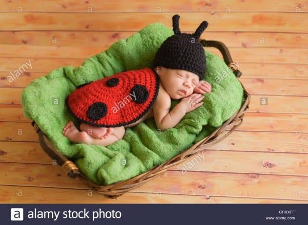 Sleeping Baby Ladybug Stock Photos & Sleeping Baby Ladybug Stock