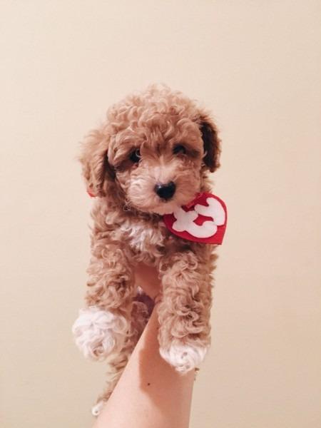 Ty Beanie Baby Halloween Dog Costume