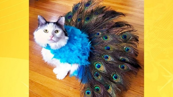 Most Adorable Cats In Costumes