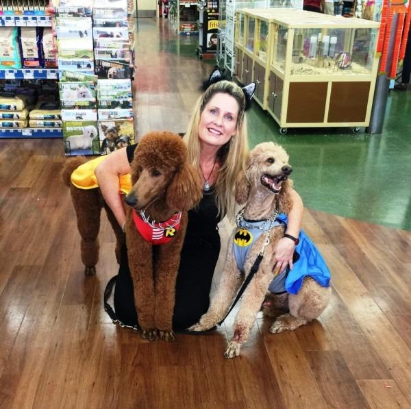 Halloween Poodle Costume Contest