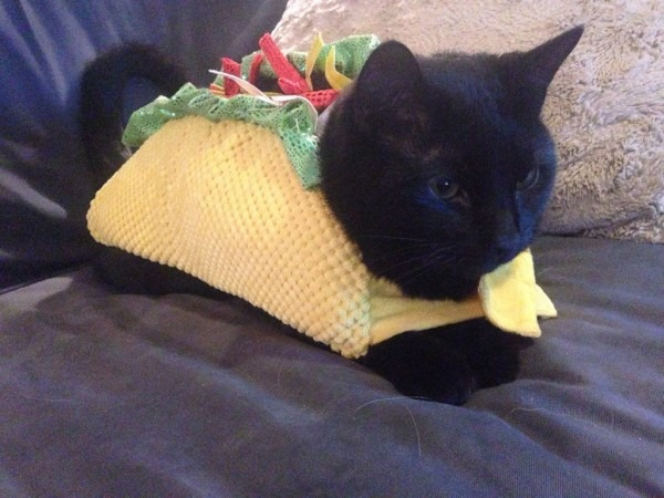 20 Of The Funniest Cats In Costumes