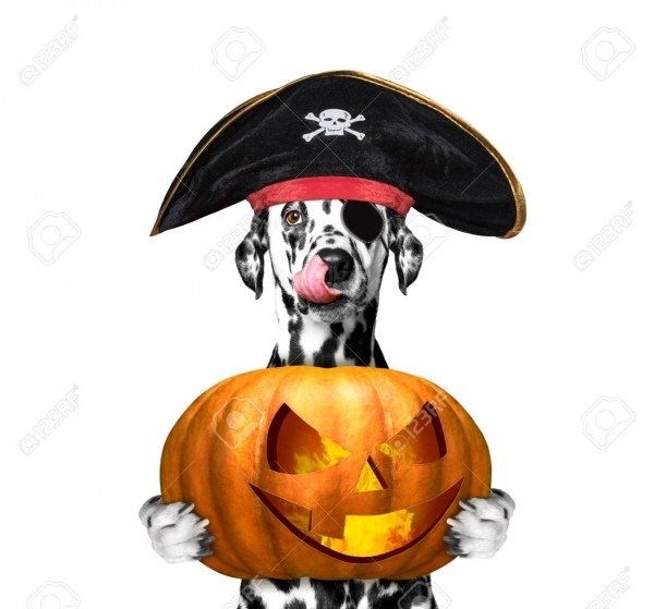 Dog In A Pirate Costume With Halloweens Pumpkin
