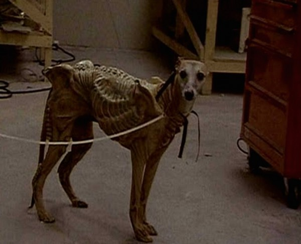 Xeno Pooch   Remembering The Time Alien 3 Tried To Use A Real Dog