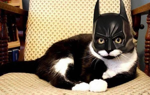 17 Hilarious Cat Halloween Costumes