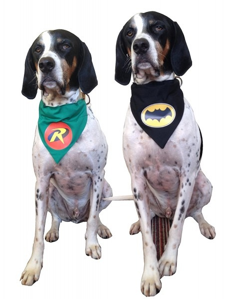 Batman And Robin Dog Bandanas – Cool Stuff For Dogs