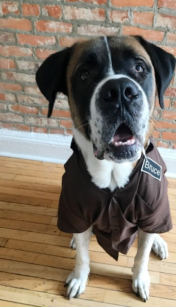 This Philly Dog Loves His Ups Driver So Much He Dressed Like Him