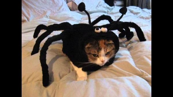 Halloween Costumes For Cats Only