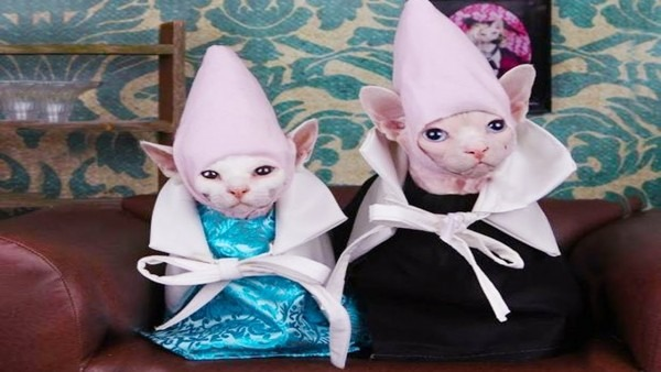 Cutest Cats In Halloween Costumes