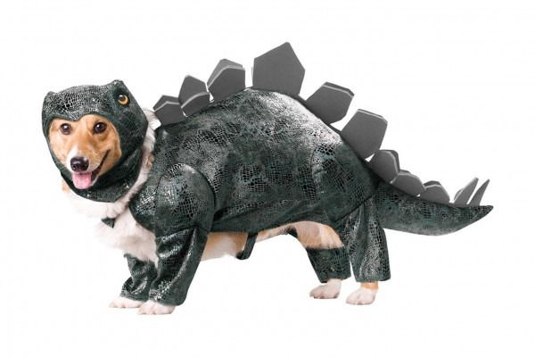 10 Best Dog Halloween Costumes 2018  Last Minute, Cheap