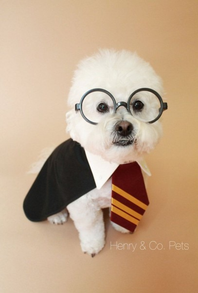 Harry Potter Inspired Dog Costume