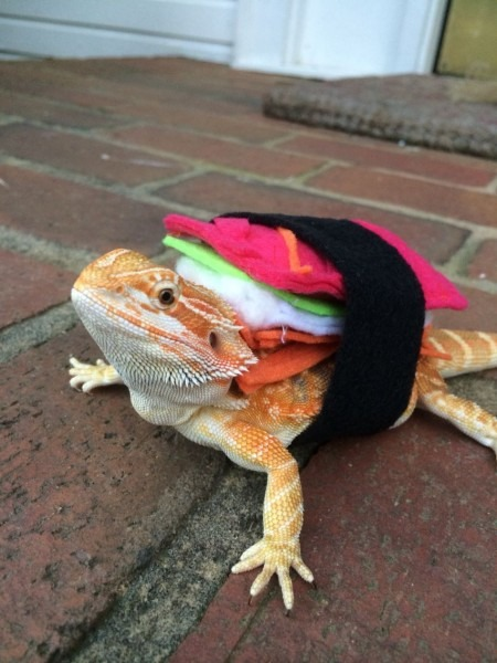 My Lizard's Diy Sushi Roll Costume I Made Her For Halloween