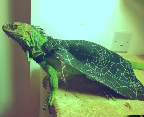 Halloween Costumes (lizard)