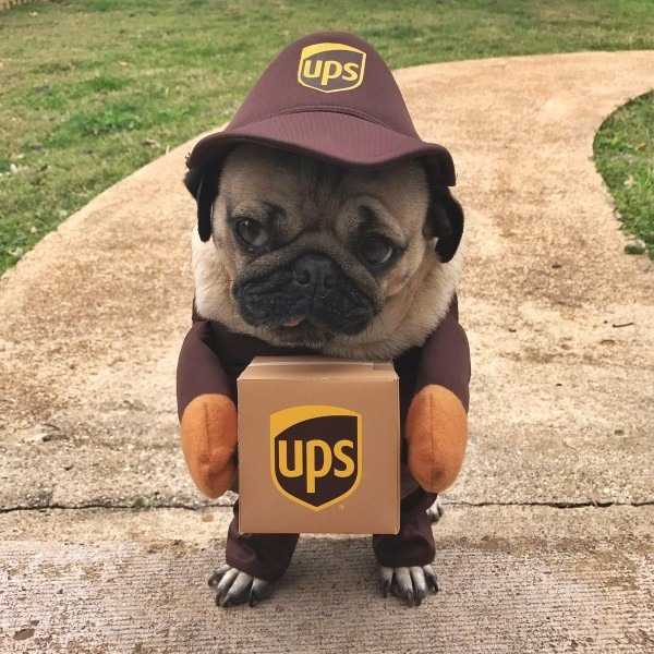 Pin By Pets Guides On Pug