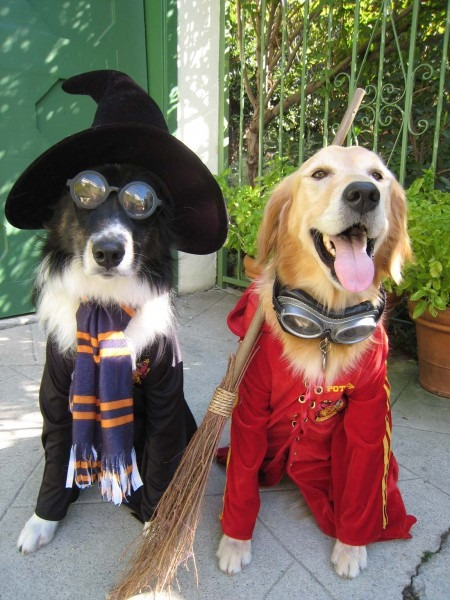 Harry Potter Dogs! So Cute!