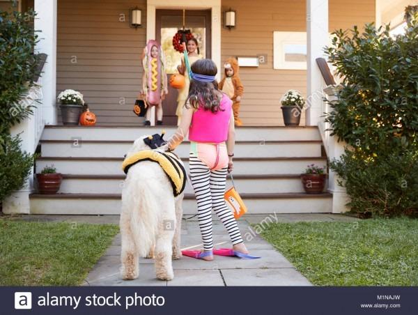 Dog Costumes Stock Photos & Dog Costumes Stock Images