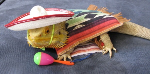 Pin By Holly Stark On Bearded Dragon