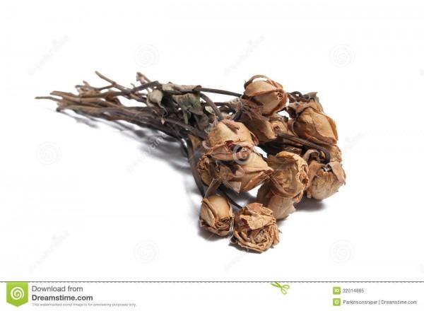 Dead Roses Stock Image  Image Of Break, Petals, Leaves