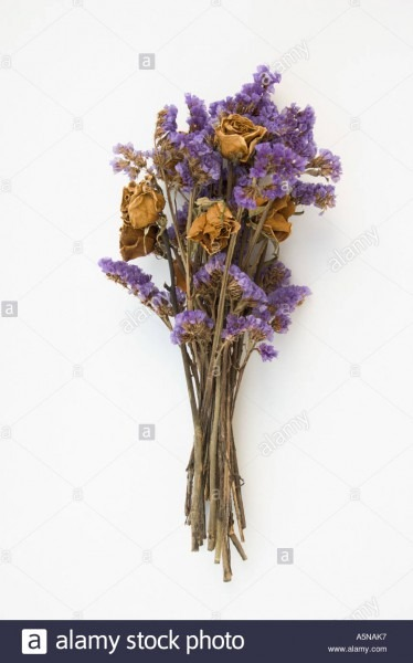 Dried Dead Rose Bouquet Stock Photo  6487222