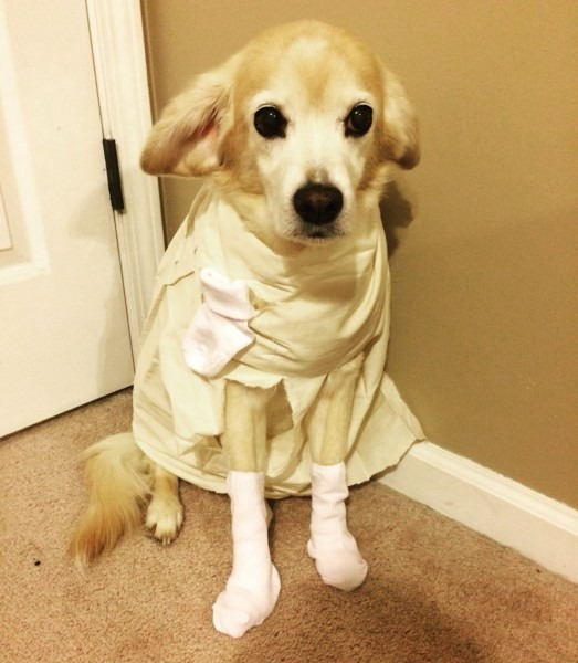 Pet Costume Ideas Dobby From Harry Potter