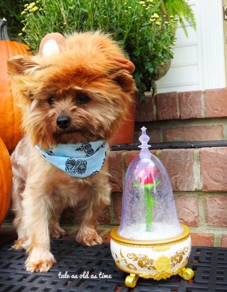 Too Cute To Spook  Pet Halloween Costumes