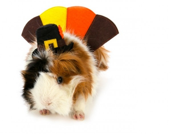 Petsmart, Halloween Costumes, Costumes For Pet