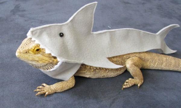 The Cutest Halloween Animals On The Internet