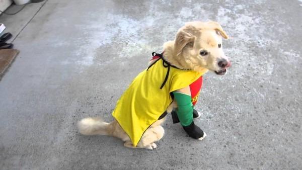 Robin Boy Wonder Pet Dog Halloween Costume